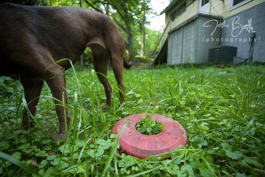 Atlanta Dog Photographer Josh Booth Photography