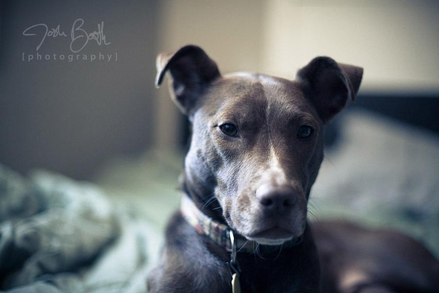 Atlanta Pet Photographer Josh Booth Photography